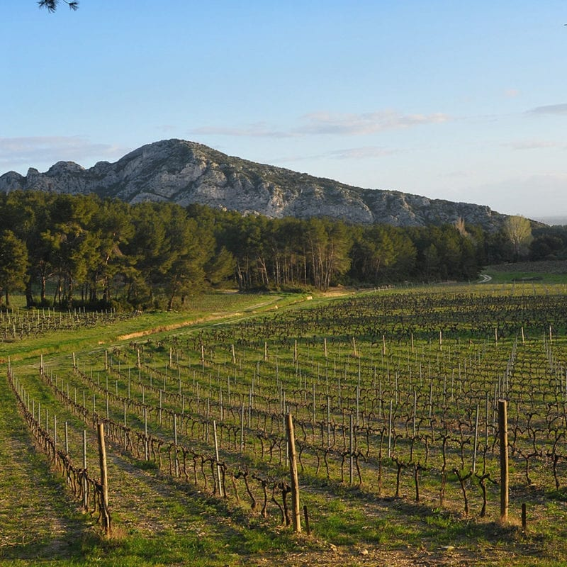 Vignes domaine La Vallongue et Alpilles